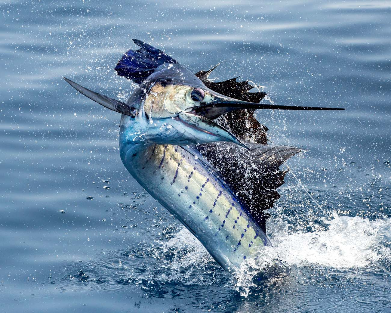 guatemala sailfish casa vieja lodge sportfishing fleet