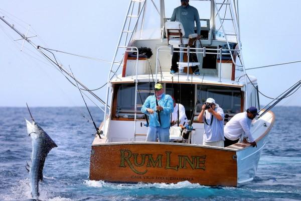 Rum Line sailfish