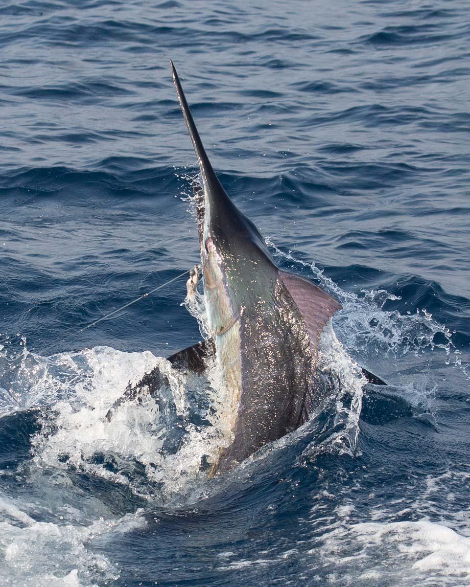 Casa Vieja Lodge & Sportfishing Fleet